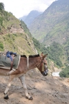 Annapurna2010small014