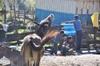 Annapurna2010small038