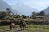Annapurna2010small039