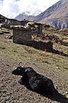 Annapurna2010small161