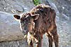 Annapurna2010small190
