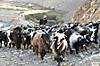 Annapurna2010small218